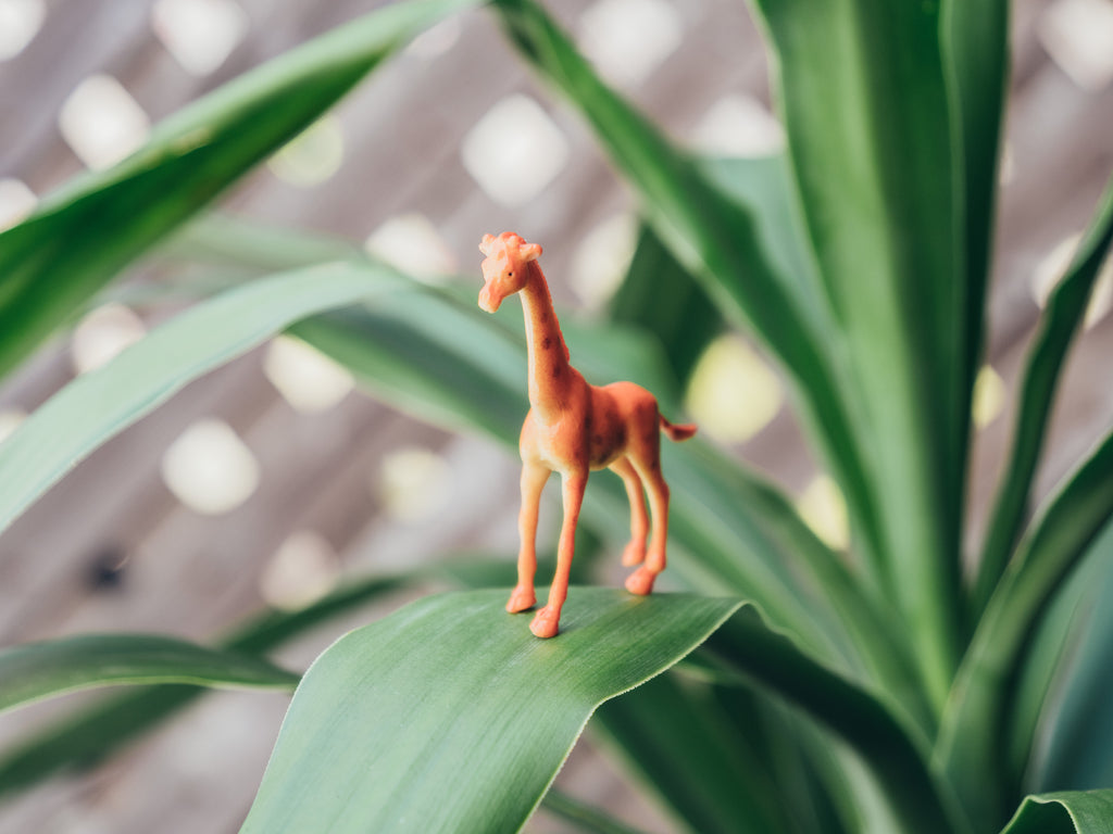Toy giraffe standing on plant leaf