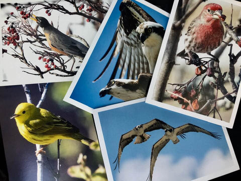 Birds Greeting Cards