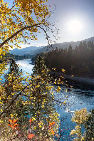 Autumn colours on the Columbia River in Castlegar