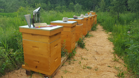 Apiary Nuc with Ontario Queen Pick up date: May