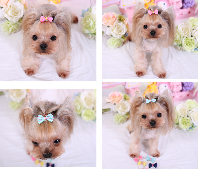 Groomer's Choice: Dog Hair Bows
