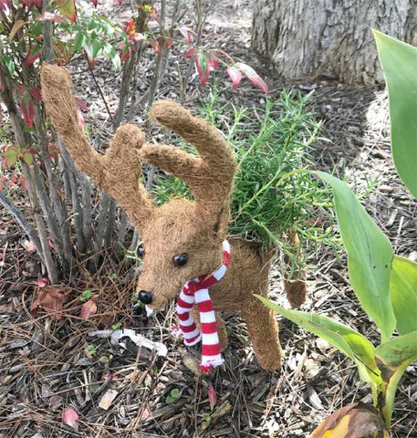 Adorable Reindeer Coco Planter