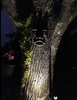 Image of The Spirit of Nottingham Woods: Greenman Tree Sculpture