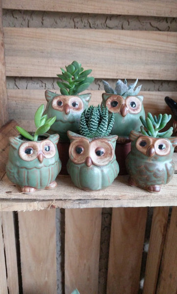 5 Piece Set Ceramic Mini Owl Pots Garden Lovers Club