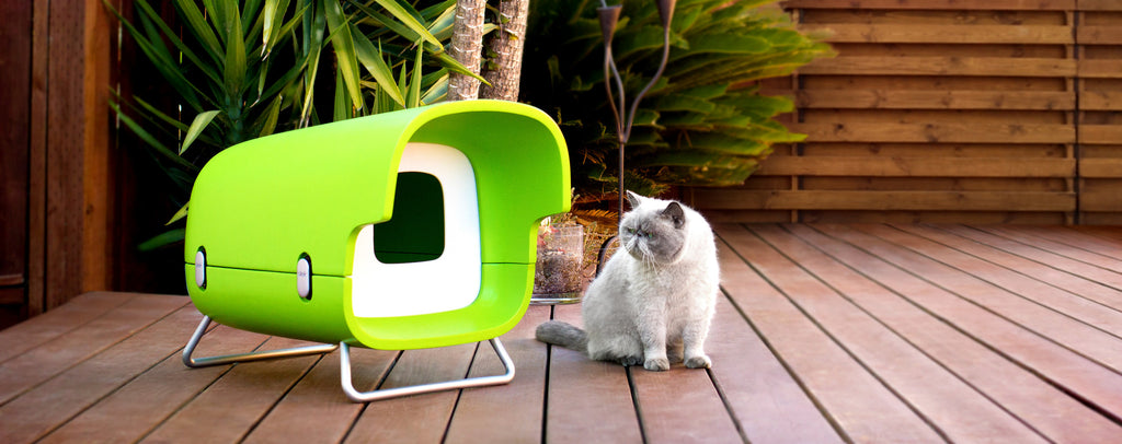 Cat adoring insulated outdoor cat house