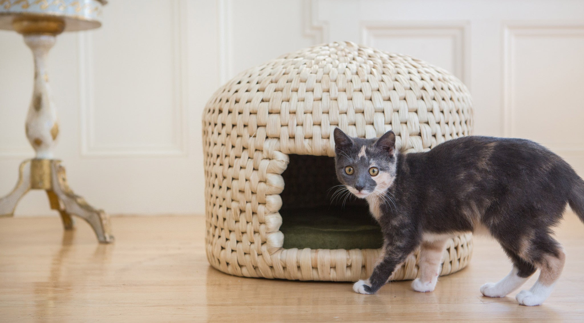 Kitten with neko chigura eco friendly handwoven straw cat bed house