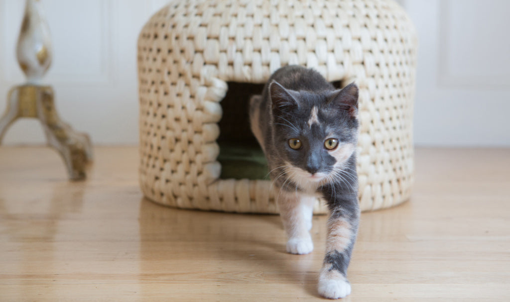 Cat stepping out of eco friendly neko chigura straw cat bed house