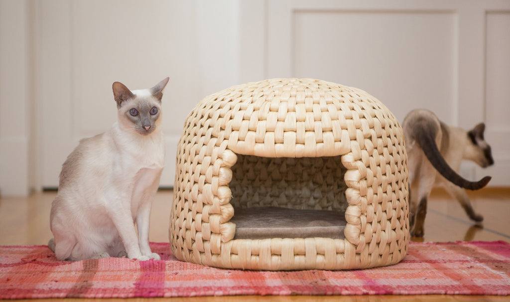 Siamese cats with eco friendly all natural neko chigura straw cat bed house