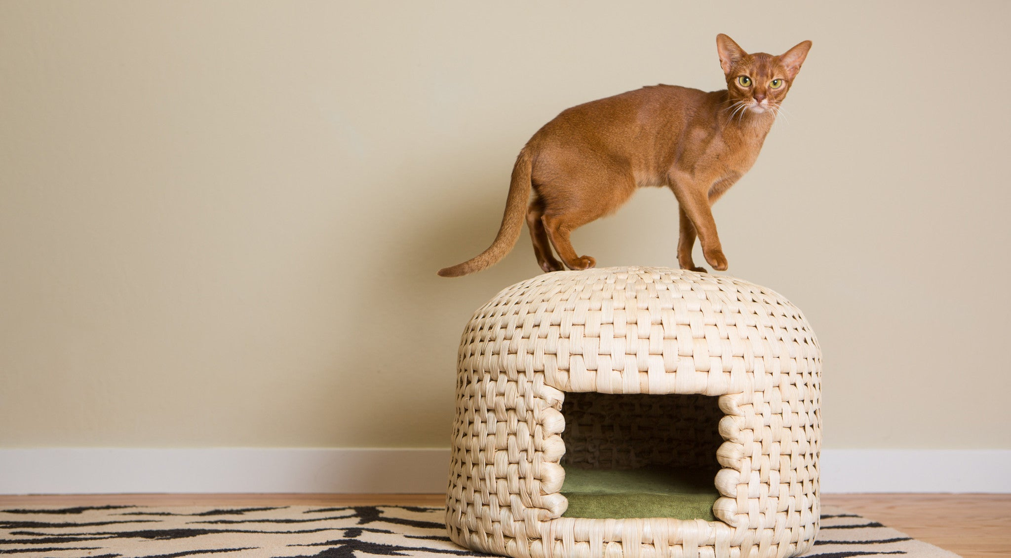 Cat climbs on neko chigura eco friendly handwoven straw cat bed house