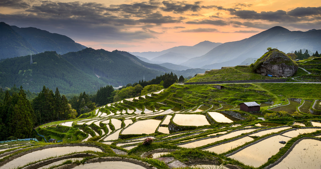Japan rice straw farm