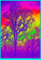 Rainbow Universe Unicorn Tree - psychedelic art