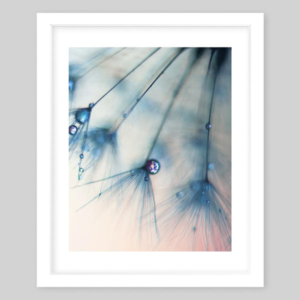 White framed art print of a photograph of small dandelions with droplets of water on each plant