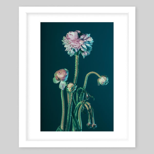 White framed art print of a photograph of a plant with some blooming flowers and some that are still developing