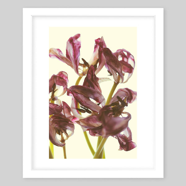 White framed art print of a photograph of purple flowers that are in their final stages and beginning to wither