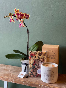 Orchid, Gourmet Chocolate and Candle