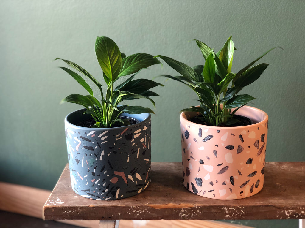 Terrazzo Look Ceramic Pots with Small Peace Lily