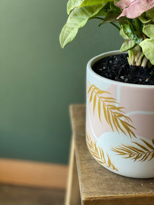 Pink-Syngonium-Plant-and-Pot-Indoor-Plant