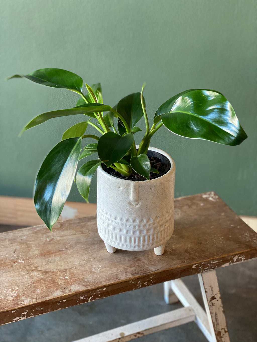 Footed-Face-Planter-with-Philodendron