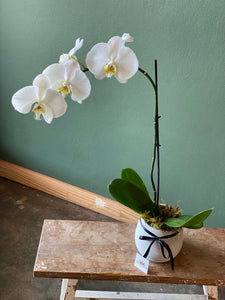 Large Concrete Potted Orchid