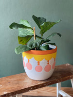 Fiddle leaf Fig in Large Ceramic Planter