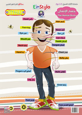 The Human Body's Poster in both English and Arabic (3-5 years)