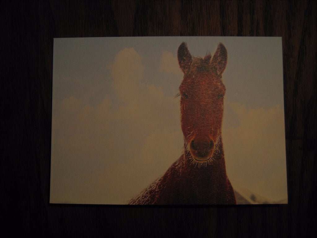 Frosted Horse Card - Thea-Bel