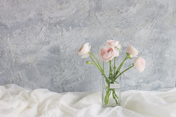 Ranunculus - Blush - Farm Direct