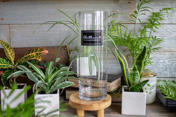 Glass Vase - Accessories