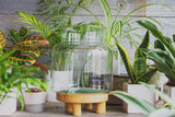 Terrarium - Accessories