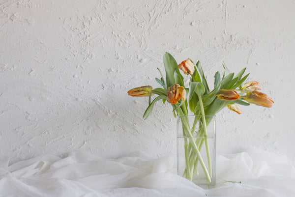 Tulip Parrot - Orange - Farm Direct