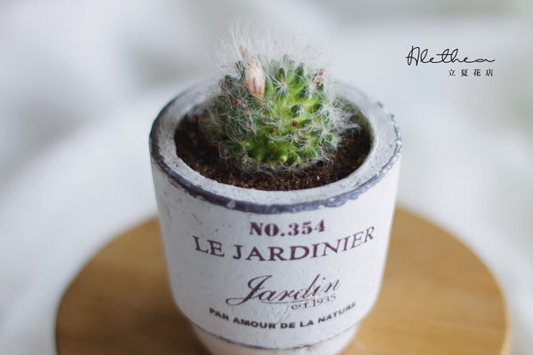 Cactus in Le Pot