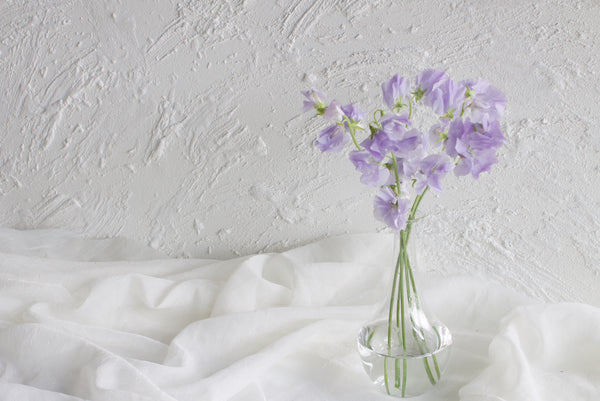 Sweet Pea - Lavender - Farm Direct