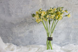 Alstroemeria - Yellow - Farm Direct