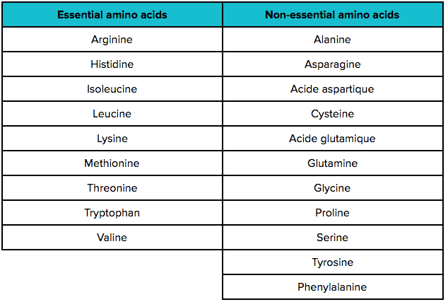 amino acids nutrition