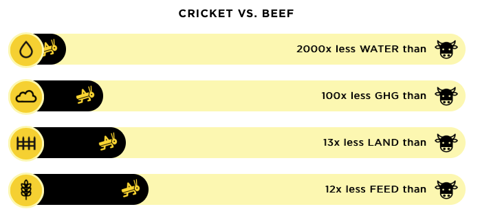 cricket - sustainable nutrition