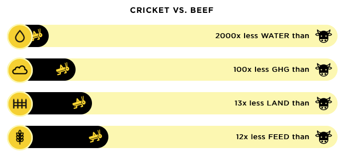 cricket - nutritious - eco friendly