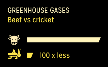 cricket sustainable fuel