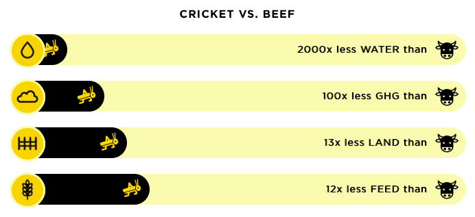 cricket vs beef protein