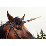 UniBand™ Black Leather Unicorn Horn Browband for Horses and Ponies