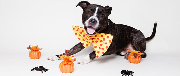 Halloween Safety for Cats and Dogs