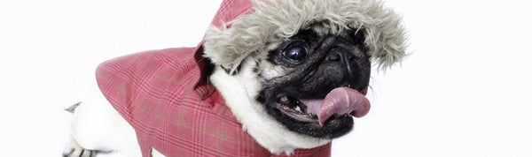 Winter is Coming - Pet Care for Cooler Months - Part 2