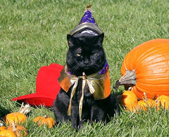 Black-Cat-Halloween-Costume-Smitten-Pets