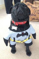 Bruce_Batman_Costume_Melbourne_Australia_02_Close_Smitten_Pets