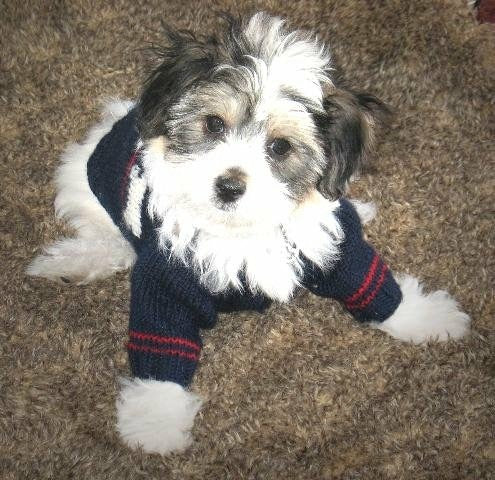 Miyow & Barkley Threadbone Navy Dog Cardigan