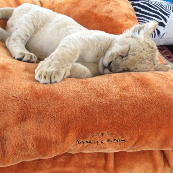 Miyow & Barkley Faux Fur Snuggle Pod in Tiger Orange