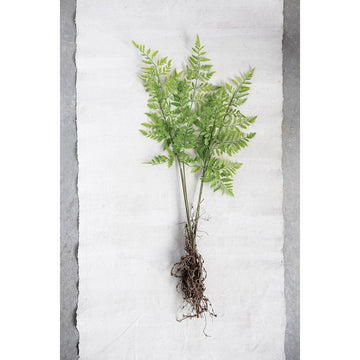 Faux Fern with exposed root