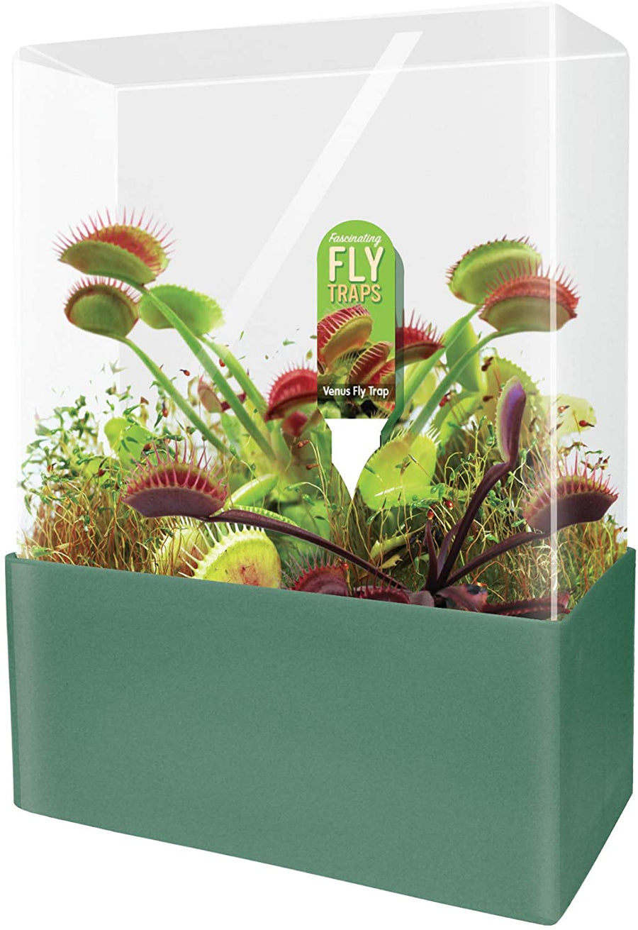 Grow Your Own Fly Traps