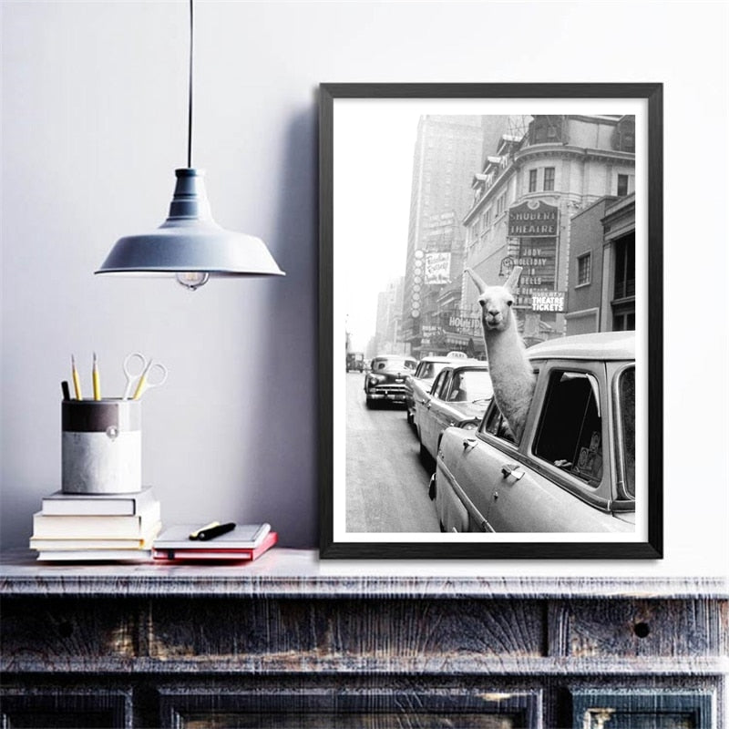 A Llama In Times Square New York 1957 Cotton Canvas Print | Unbox Happiness