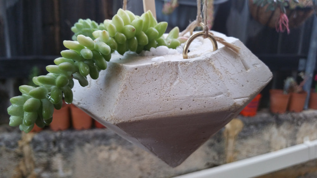 Concrete hanging diamond with succulent
