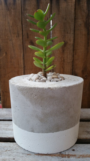 White Concrete Planter